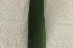 Selling With Online Payment: FARM FRESH ZUCCHINI