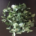 Ilmoitus: Myydään teko eucalyptuksen oksia yms.