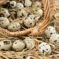 For sale: Quail Eggs