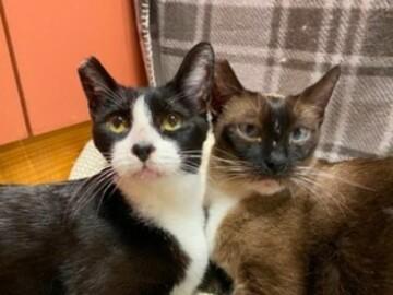 : Bella & Morgana