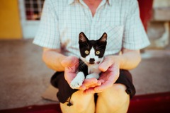 Looking for volunteers: Pet Therapy Needed