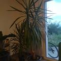Don: Donne trois belles plantes d'intérieur