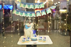 Price Per Hour: Pets Birthday Party