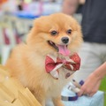 Price Per Hour: Pets Photography