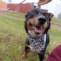Anuncio: Perrita y cachorros en pronta adopción