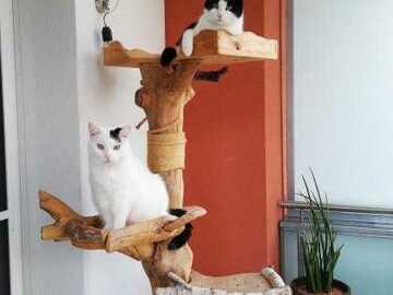 Dienstleistung: Katzenbetreuung Graz