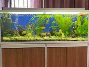 Myydään: *Aquarium 240L - bought almost 6 months ago