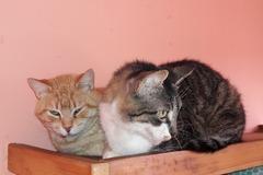 Anuncio: 2 gatos buscan una adopción juntos