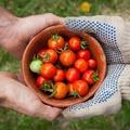 NOS JARDINS A PARTAGER: jardin à partager à Lourmaisà 6 km de Combourg 35270