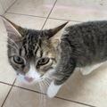 Anuncio: Roberto el Gato  ❤️