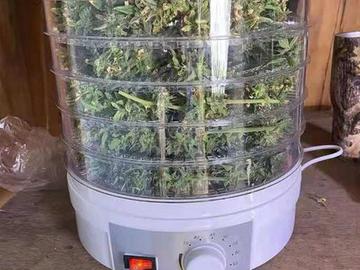 Post Now: ECO Farm Electric Medicinal Plants Dryer