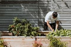 Looking for volunteers: Fundraising Volunteer for school's vegetables garden