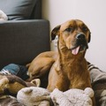 Looking for volunteers: Make Toys for Shelter Animals