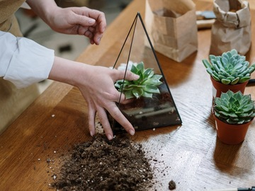 Events priced per-person: Terrarium Building! How to Thrive