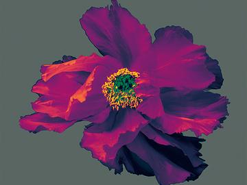 Sell Artworks:  Dancing Flower