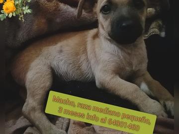 Anuncio: Cachorros en adopción
