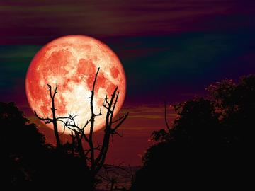 Selling: OCTOBER Full Moon SPELL & READING COMBINATION. Hunter's Moon!