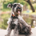 Price Per Hour: Pet Photography