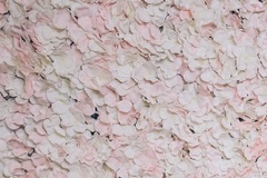Ilmoitus: Kukkaseinä 240cm x 200cm