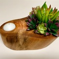 Selling with online payment: Cuban Mahogany Wood Log Planter / Candle Holder