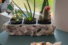 Selling with online payment: Oyster Shell Planter