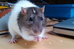 Urlaubsbetreuung: Small Pet Home