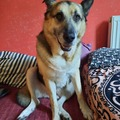 Urlaubsbetreuung: Hunde-Urlaubsbetreuung Graz