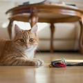 Urlaubsbetreuung: Katzen-Urlaubsbetreuung Graz