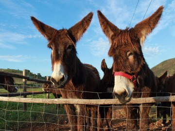 To experience: Burricadas no Burroville / Donkey Ville