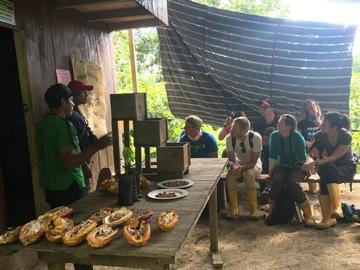 Excursion or Lesson: Amazon Cacoa Farm tour