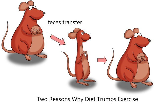 Homemade weight loss diet