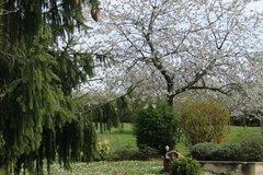 Offres: le jardin de mes rêves