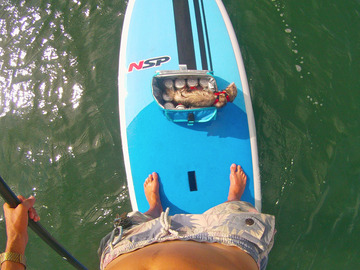 For Rent: 9'8 NSP Paddle Board