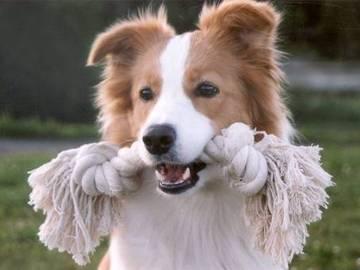 Offering: Koiran ulkoilutusta