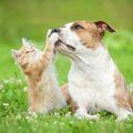 Dienstleistung: Zusammenführung von Hund und Katze
