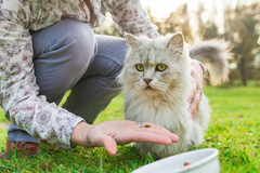 Dienstleistung: Persönliche Ernährungsberatung für Katzen