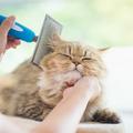 Dienstleistung: Tiersitting in Graz