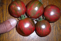 pay by mail only, w/ request form:  Tzi Bi U Tomato (violet jasper)