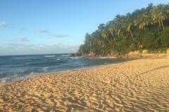 Excursion or Lesson: Las Terrenas Surf & Ecotour Family Package,  Dom. Rep.