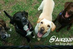 Free Consultation: Pet Care Services for  Aiken, SC