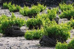 Priced: #Santorini: Explore the Magical World of Volcanic Wines