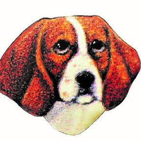 Birch Beagle