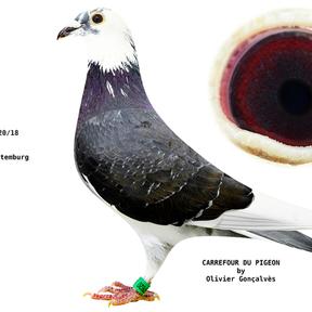 www.carrefour-du-pigeon.com