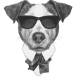 Alpha dog square 150 dpi png